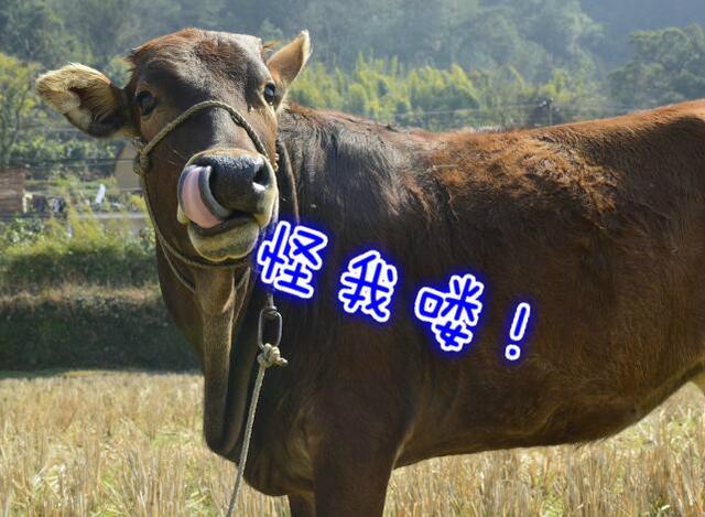 两周时间iPhone7已跌破官网价 黄牛不受打击要跳楼