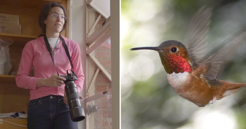 200多只蜂鸟的朋友是摄影师