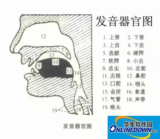 图解英语48个音标发音 太牛了收藏起来(图)