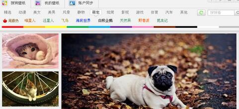 搜狗壁纸下载图片的操作过程