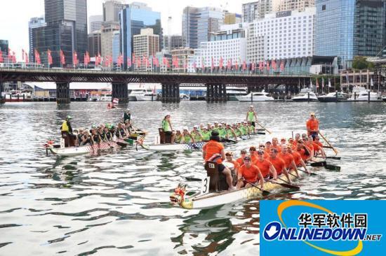悉尼龙舟赛为中国农历新年添彩