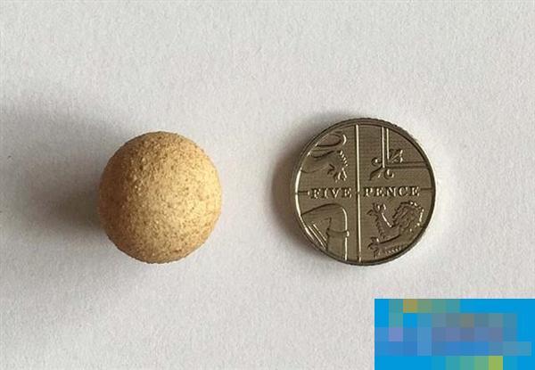 世界最小鸡蛋亮相:还没一枚硬币大