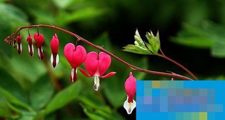 如何拍摄室外花朵